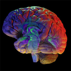 Can your brain rewire itself